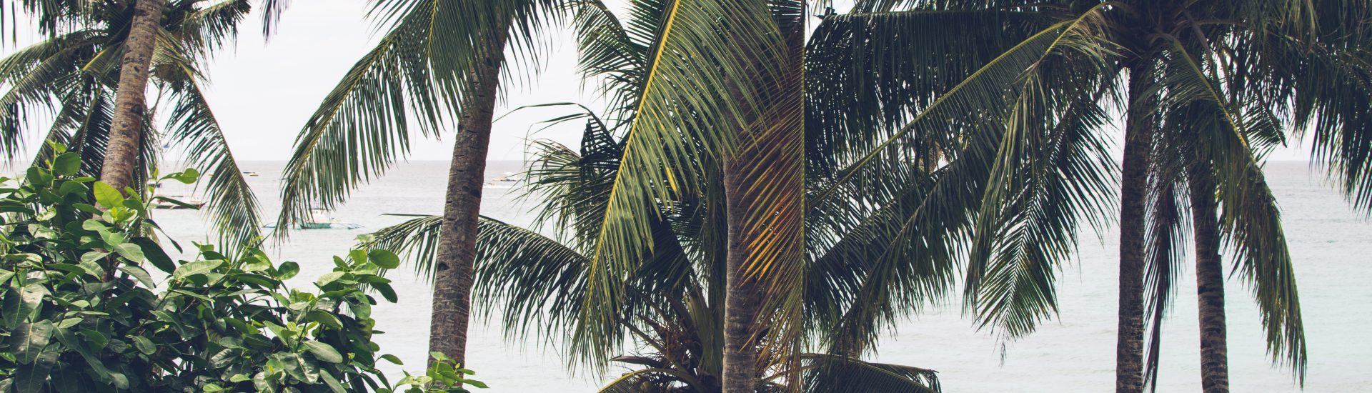 Palmen auf Boracay